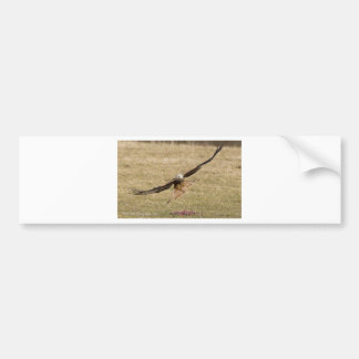 Red Kite (Milvus Milvus) Bumper Sticker