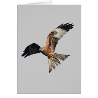 Red Kite - Milvus milvus Card