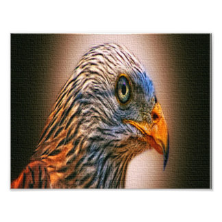 Red Kite Photograph