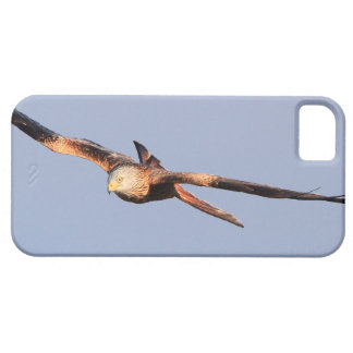 Red Kite Raptor iPhone 5 Case