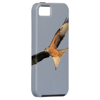 Red Kite Raptor iPhone 5 Covers