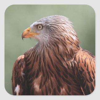 Red Kite Square Sticker