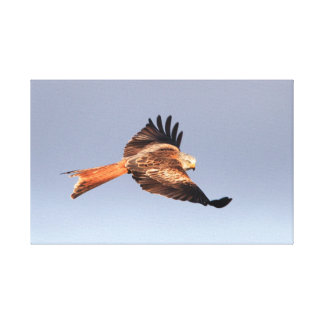 Red Kite Wrapped Canvas Stretched Canvas Print