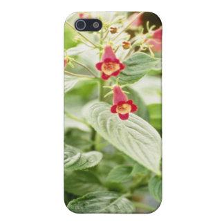 Red Kohleria Medea Tree Gloxinia flowers iPhone 5 Covers