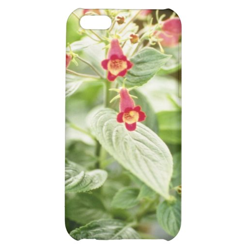 Red Kohleria Medea Tree Gloxinia flowers Case For iPhone 5C