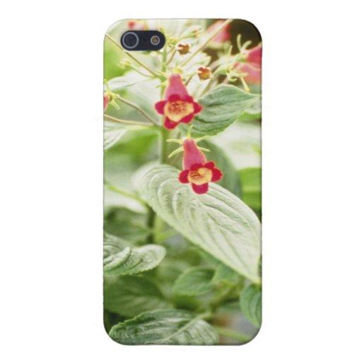 Red Kohleria Medea Tree Gloxinia flowers iPhone 5 Case