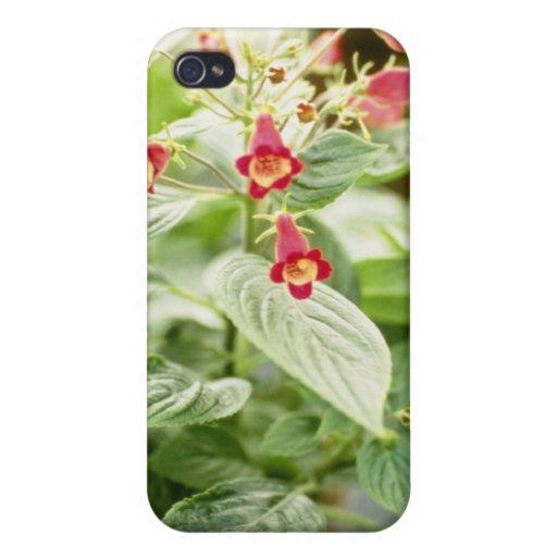 Red Kohleria Medea Tree Gloxinia flowers iPhone 4/4S Cases