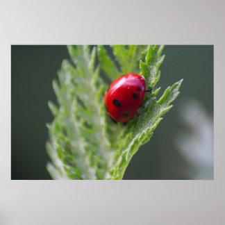 Red Ladybug Macro Photography Print Poster