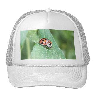 Red Ladybug On A Green Leaf Trucker Hats