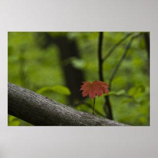 red-leaf-2012-04-28 poster