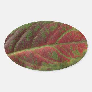 Red Leaf closeup oval sticker, sealer, label