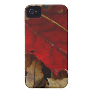 Red Leaf in Autumn iPhone 4 Covers