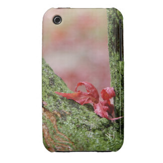 Red Leaf in Balance iPhone 3 Case
