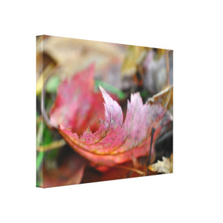 Red Leaf in the Fall Color Photo Canvas Prints