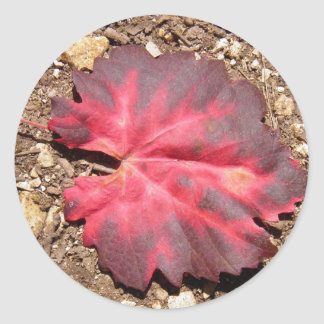 Red Leaf on a path Stickers