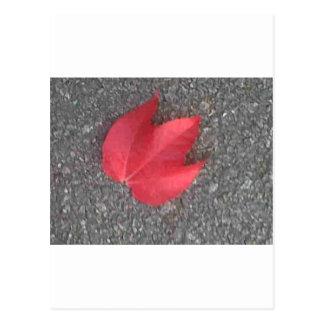 Red leaf on tarmac postcard
