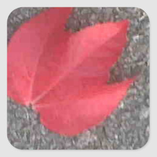 Red leaf on tarmac square sticker