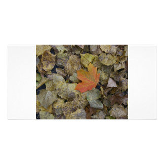 Red Leaf Picture Card