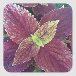 Red Leaf Plant Large Square Stickers