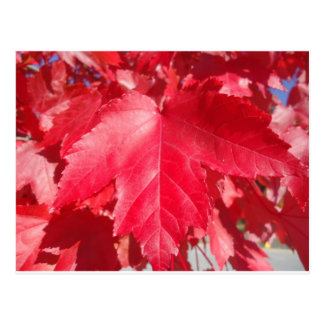 Red Leaf Postcard