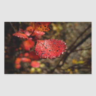 Red Leaf with Spots Rectangular Sticker