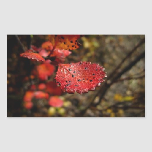 Red Leaf with Spots Sticker