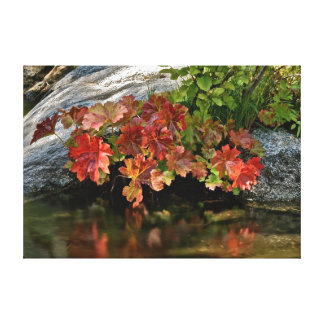Red leaves and reflections on stretched canvas gallery wrap canvas