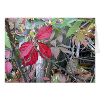 Red Leaves in Ann Arbor Greeting Card