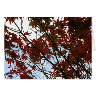 Red Leaves of Wales Greeting Card