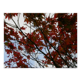 Red Leaves of Wales Poster