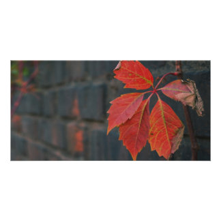 Red Leaves Photocard Photo Card Template