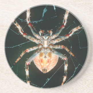 Red-Legged Orb-Web Spider Coaster