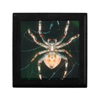 Red-Legged Orb-Web Spider Gift Box