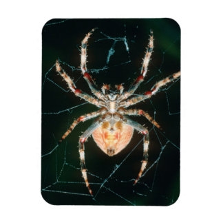 Red-Legged Orb-Web Spider Magnet
