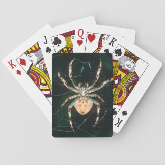 Red-Legged Orb-Web Spider Playing Cards