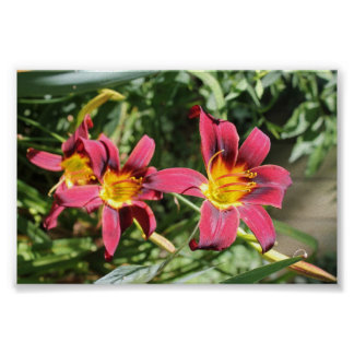 Red Lillies of Kentucky Poster