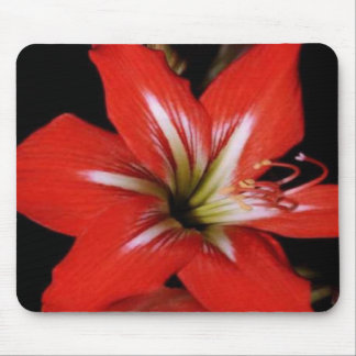 Red-lilly, on a mousepad