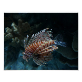 Red Lionfish Poster