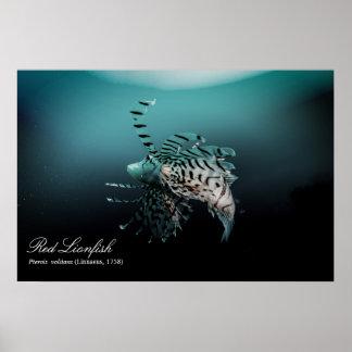 Red lionfish (Pterois volitans ,Linnaeus, 1758) Poster