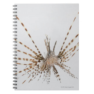 Red lionfish (Pterois volitans) Notebooks