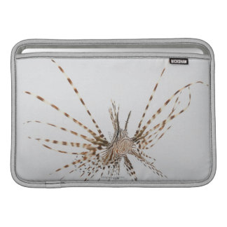 Red lionfish (Pterois volitans) Sleeve For MacBook Air
