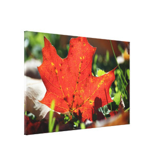 Red Lonely Canvas Print