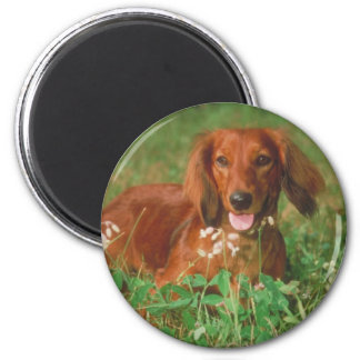 Red Long Haired Dachshund 6 Cm Round Magnet