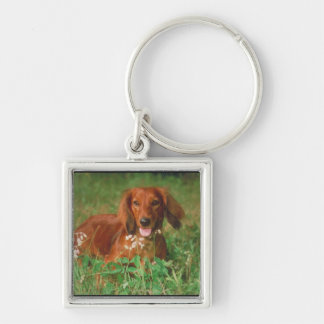 Red Long Haired Dachshund Key Ring