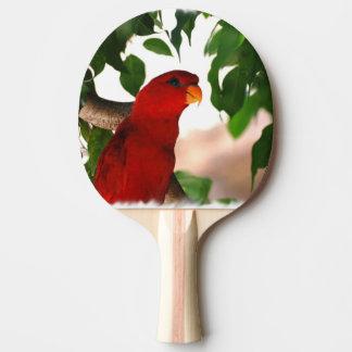 Red Lorikeet Ping Pong Paddle