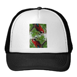Red Macaw Abstract Cap