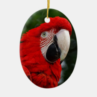 Red Macaw Christmas Ornament