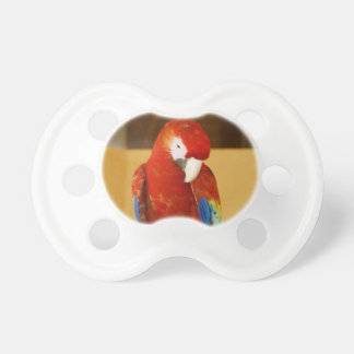 Red Macaw Dummy