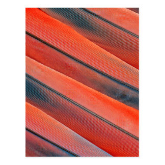 Red Macaw Feather Abstract Postcard