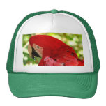 Red Macaw Parrot Hat